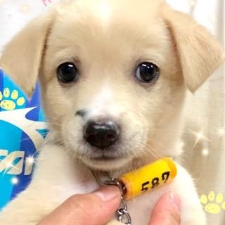 個体識別番号:M587 可愛い子犬