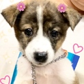 個体識別番号:W588 可愛い姉妹の子犬