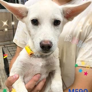 個体識別番号:M590 元気な子犬です。