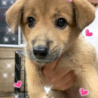 個体識別番号:W595 可愛い子犬