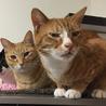 猫を譲渡する際の手術代行は規約違反?