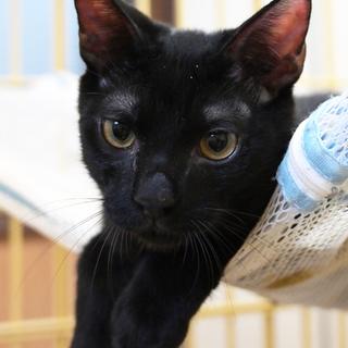 精悍な黒猫くん