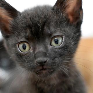 ちっちゃい黒猫