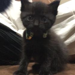 子猫保護しましたฅ•ω•ฅ