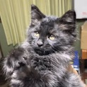 仮名【ジジ】黒猫の元気いっぱいな子猫です!