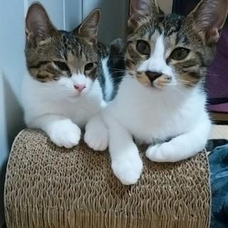 兄弟猫、クッキー君・プリン君