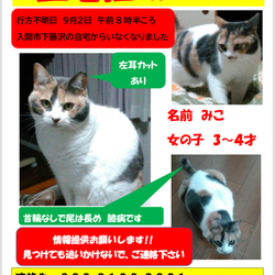 【拡散希望】迷子の猫を探しています!!