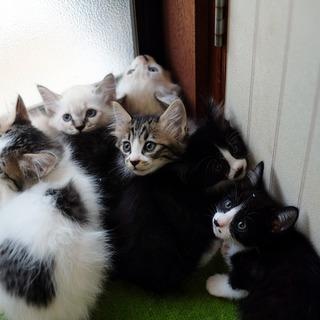 高齢者宅で生まれてしまった6匹の子猫たち