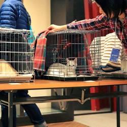 保護猫譲渡会in書泉グランデ