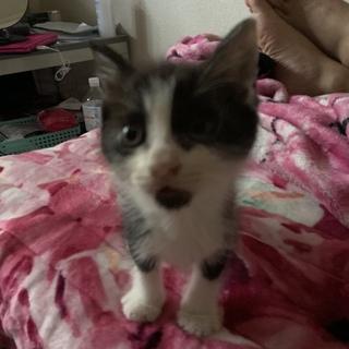 捨て猫だった子猫ちゃん白黒2匹生後2週間