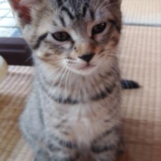 7月25日生まれのかわいい子猫②