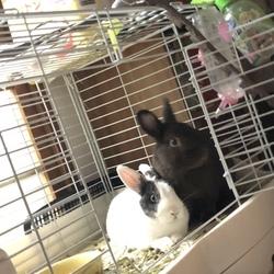 ウサギの僧帽弁閉鎖不全症について