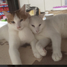 寄り添う猫モッチー サムネイル7
