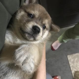 中型MIXの子犬 つきちゃん