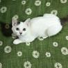可愛い美仔猫ちゃんの里親募集✨