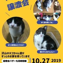 第4回保護猫の譲渡会In山口県
