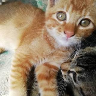 レッサーパンダみたいな可愛らしい子猫です!!