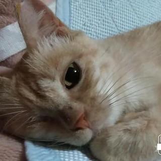 哀愁漂う猫(片目、エイズプラスの子に幸せを)