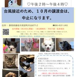 (中止)保護猫&保護犬の譲渡会