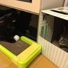 トライアル28日目。両猫見つめ合い。いつでも跳びかかれる感じ。
