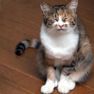 性格穏やかな 美しい三毛猫 メリー