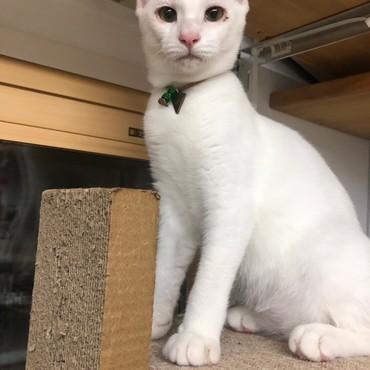 猫だけど、アタシ猫背じゃないよね?