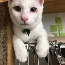 白猫の子猫3匹