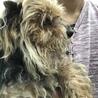 老犬、アラ。 サムネイル7