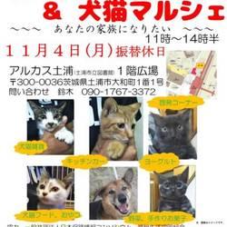 犬と猫の譲渡会
