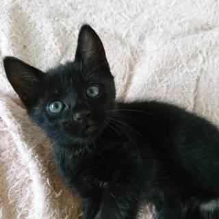 黒猫 メス 胸元逆ハート