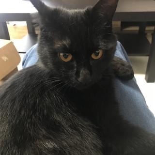 人間大好きな黒猫1歳