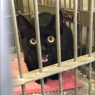 岩国健康福祉センター132黒猫