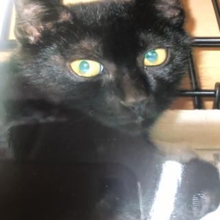 可愛い黒猫の女の子 子猫