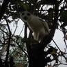 木蓮の木に登るイーグル(=^・^=)