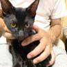 元気いっぱいの黒猫とうまくん♪