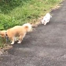 犬と猫の散歩♪