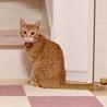 丸顔の美猫、茶トラ女子! サムネイル3