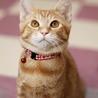 丸顔の美猫、茶トラ女子! サムネイル4