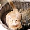 丸顔の美猫、茶トラ女子! サムネイル5