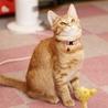 丸顔の美猫、茶トラ女子! サムネイル6