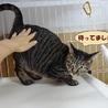 ツンデレ猫もいいですよ☆ サムネイル3