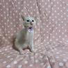 美しい白猫・ハットくん サムネイル3