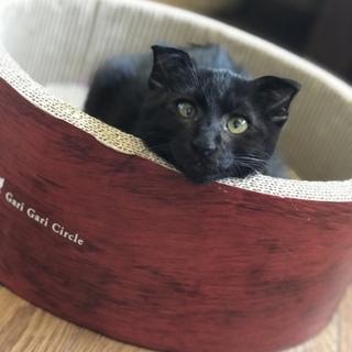 多頭飼育で生活していた子猫