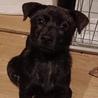 生後2ヶ月ちょっとの甲斐犬mixの女の子2匹 サムネイル4