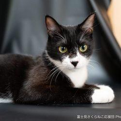 埼玉県富士見市『富士見ふるさと祭り』猫譲渡会 サムネイル3