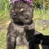 俺は男だ。なぜ花を乗せるか?!