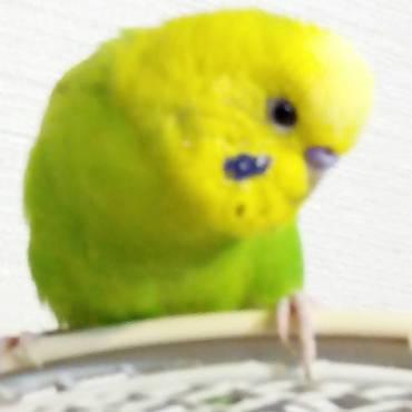 大好きな扇風機の上で、おしゃべりです(^^)