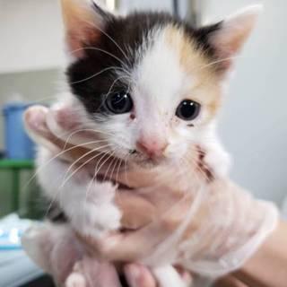 処分間近 小さい子猫達 動画あり