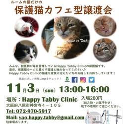 保護猫カフェ型譲渡会