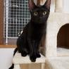 黒猫の女の子くるみちゃん